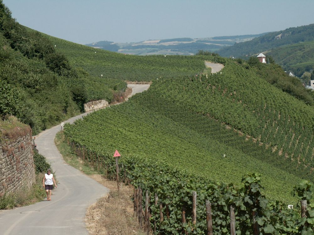 circuit pedestre nature and wine discovery grevenmacher 3