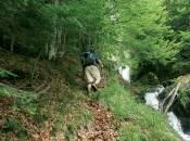 nordic walking 2