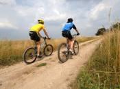 mtb trail dalheim