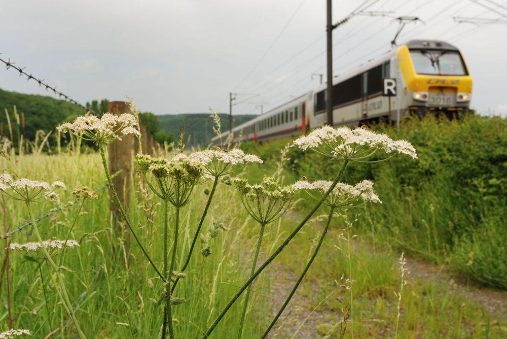 fietstour van station naar station colmar berg diekirch foto 2