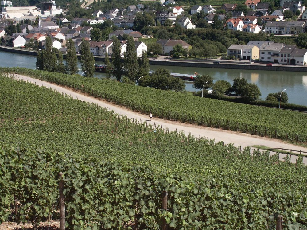 circular walk grevenmacher II photo 3