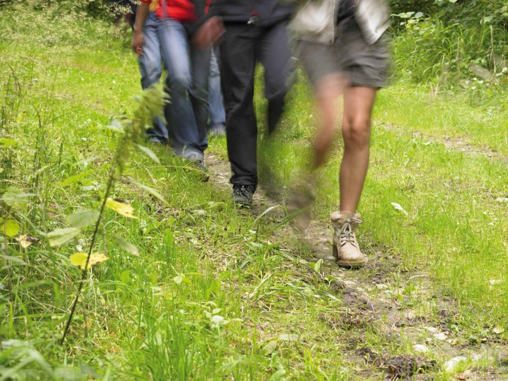 sentier pedestre en etapes nord weiswampach photo 1