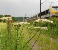 02 station to station clervaux munshausen drauffelt photo 2