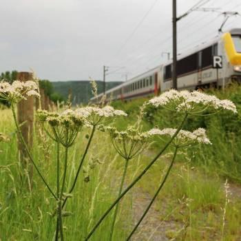 39 station to station wecker manternach photo 2